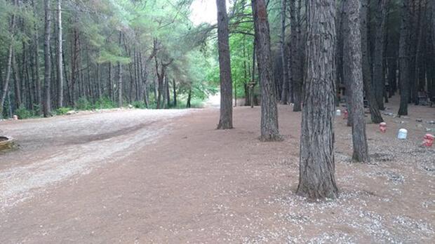 Çiftmazı Tabiat Parkı Bitki Ve Ağaç Türleri