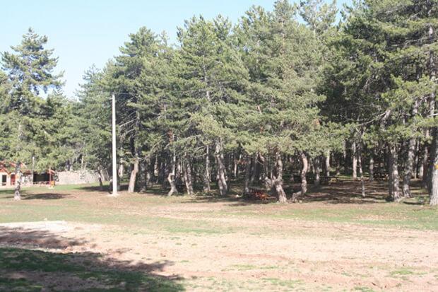 Aluçdağı Tabiat Parkı Flora Ve Fauna Bilgileri