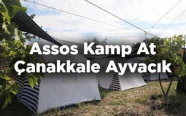 Assos Kamp At - Çanakkale Ayvacık