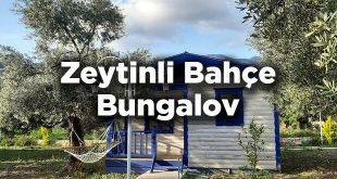 Zeytinli Bahçe Bungalov Datça- Mesudiye