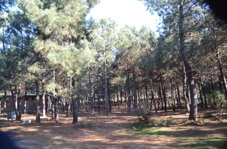 Göztepe Tabiat Parkı'nda Neler Yapılır?