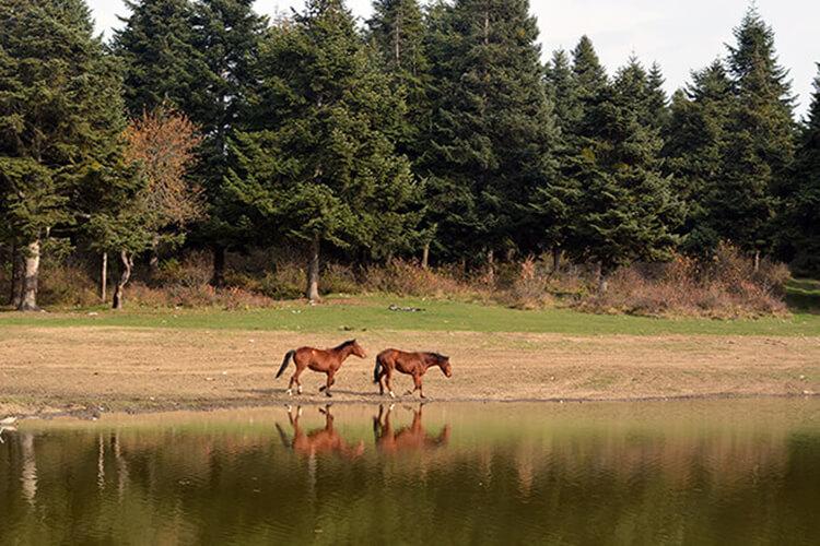 At Yaylası Kamp Alanı
