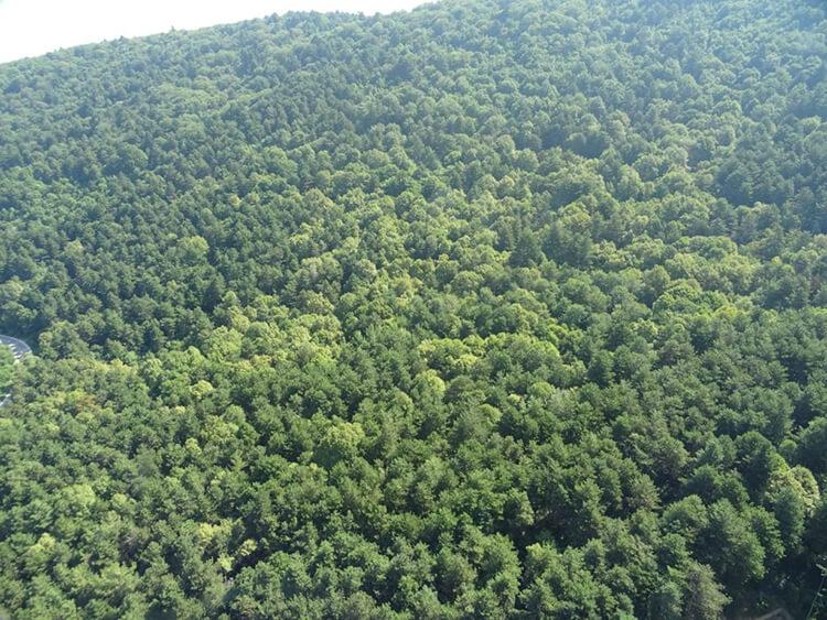Bursa'da Orman Yasağı