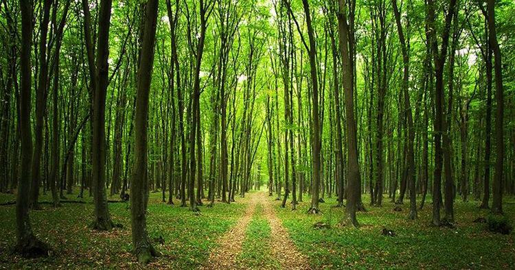 İstanbul'da Orman Yasağı