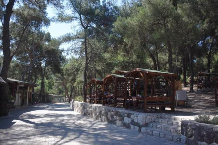 İzmir'de Orman Yasağı