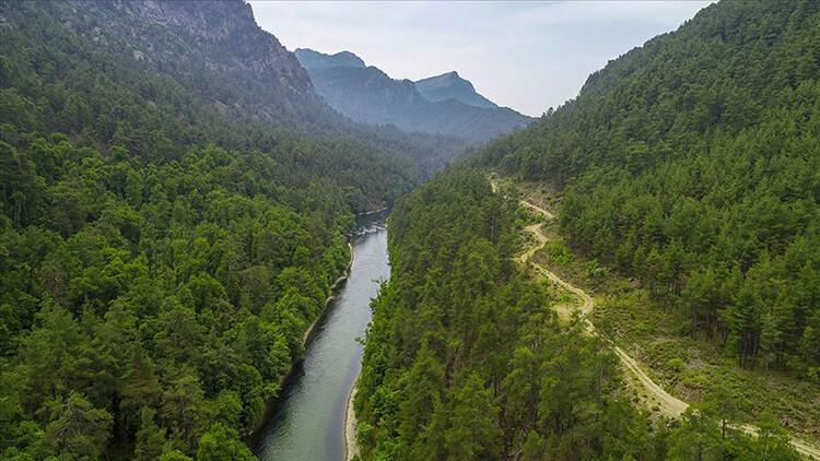 Kargı Köyü Sığla Ormanı Kamp Alanı