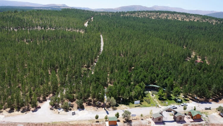 Konya'da Orman Yasağı