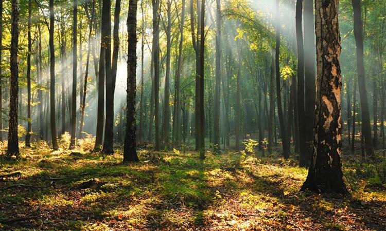 Hangi İllerde Ormana Girmek Yasaklandı?