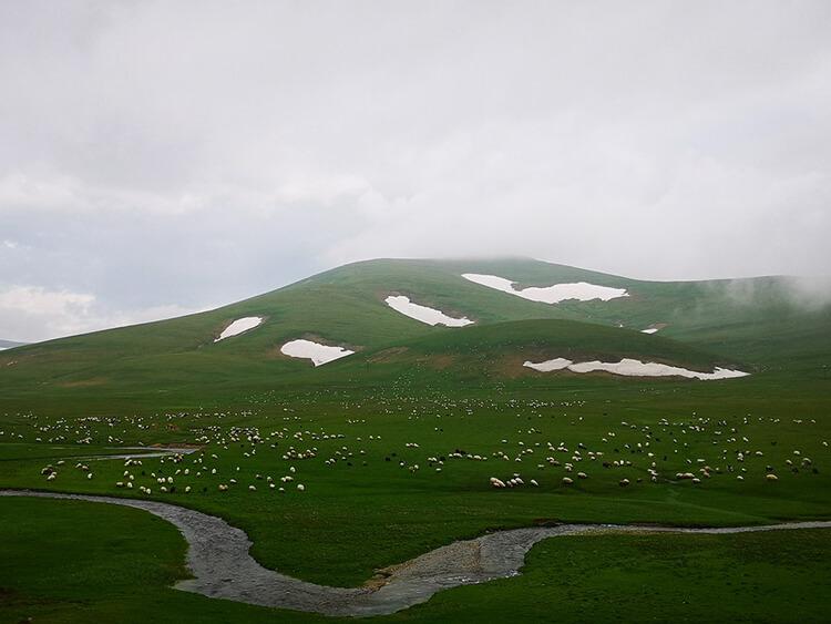 Cami Boğazı Yaylası Kamp Alanı